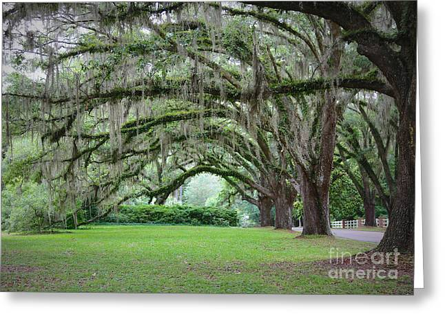 Southern Grace Greeting Card by Carol Groenen
