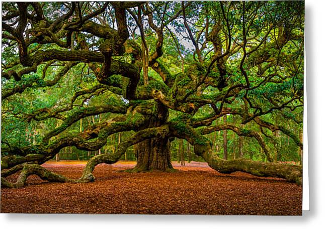 Angel Oak In Charleston Greeting Card