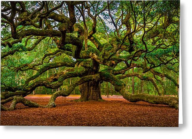 Angel Oak In Charleston Greeting Card