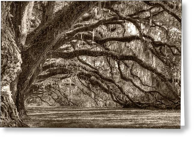 Southern Live Oak Trees Greeting Card by Dustin K Ryan