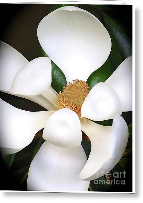 Southern Magnolia Cameo Greeting Card by Carol Groenen