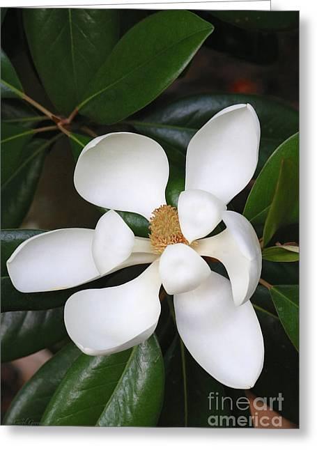 Southern Magnolia Grandiflora Greeting Card