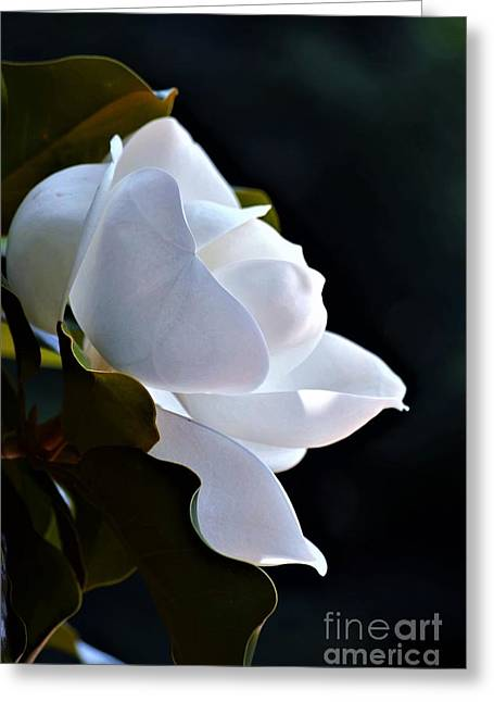 Southern Magnolia Profile Greeting Card