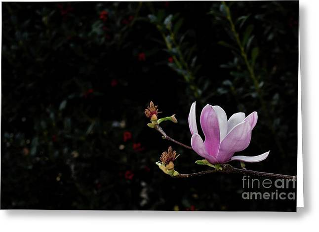 Southern Magnolia Greeting Card by Skip Willits
