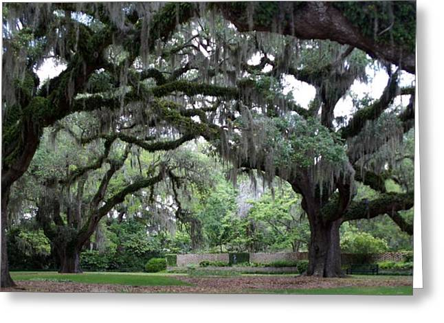 Southern Mist Greeting Card by David and Lynn Keller