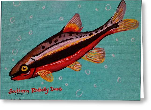 Southern Redbelly Dace Greeting Card by Emily Reynolds Thompson