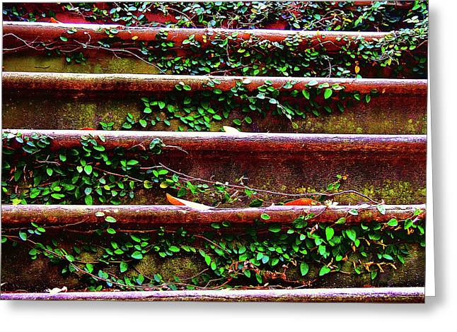 Southern Ivy Steps Greeting Card by JAMART Photography