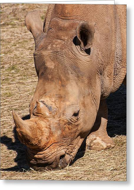 Southern White Rhino Greeting Card by Chris Flees