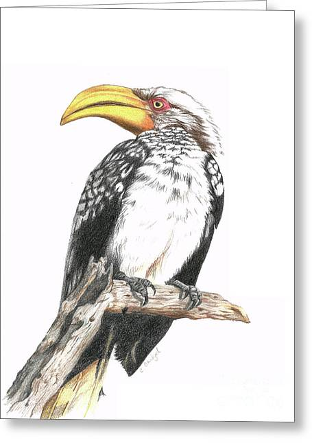 Southern Yellow Billed Hornbill Greeting Card by Cindy Skidgel