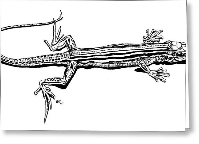 Southwest Lizard Greeting Card by Stephen Taylor