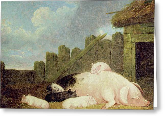 Sow With Piglets In The Sty  Greeting Card by John Frederick Herring Snr