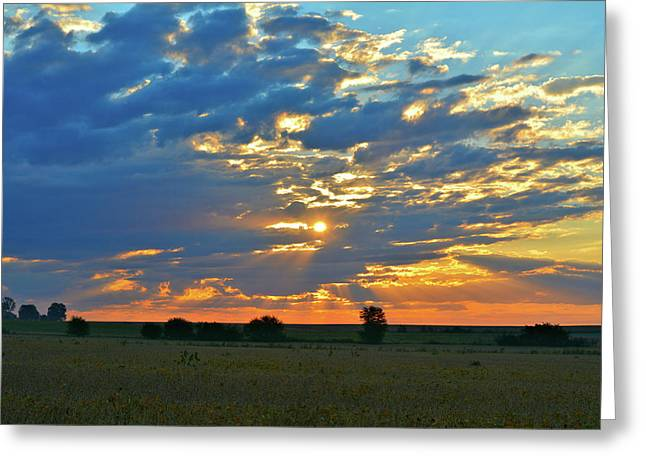 Soybean Sunrise Greeting Card