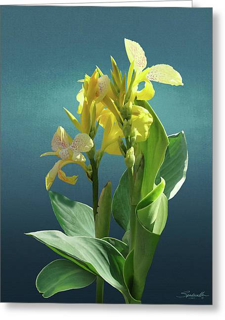 Spade's Yellow Canna Lily Greeting Card by Spadecaller