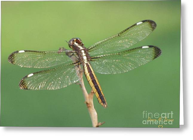 Greeting Card featuring the photograph Spangled Skimmer Dragonfly Female by Donna Brown