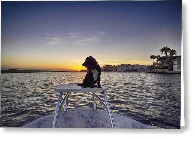Spaniel At Sunset Greeting Card