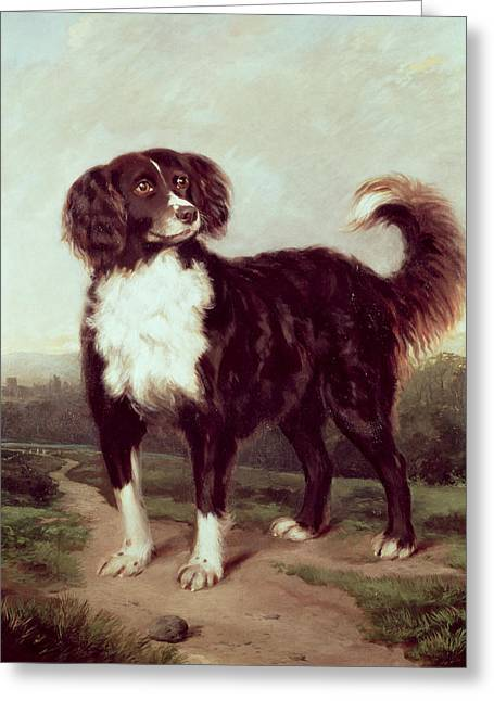 Spaniel Greeting Card by JW Morris