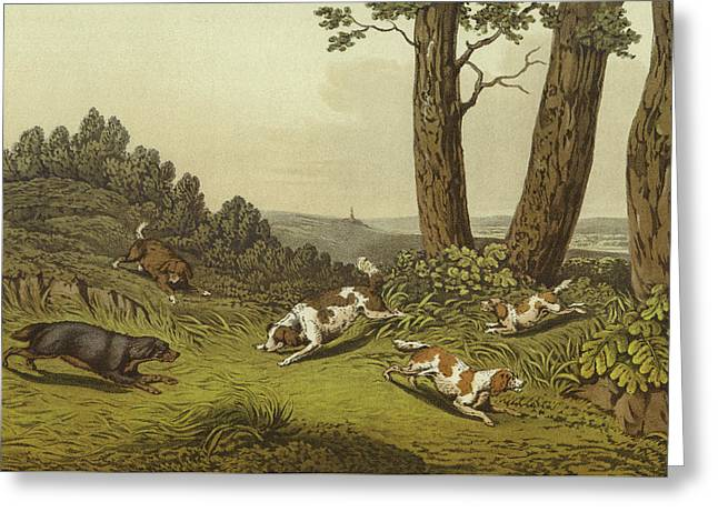Spaniels Greeting Card by Henry Thomas Alken