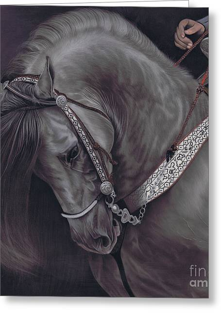 Spanish Horse Greeting Card