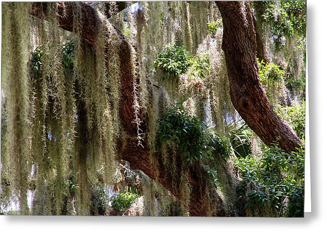Spanish Moss Cascade Greeting Card