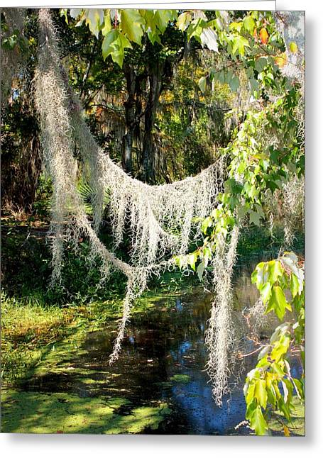 Spanish Moss Over The Swamp Greeting Card by Carol Groenen