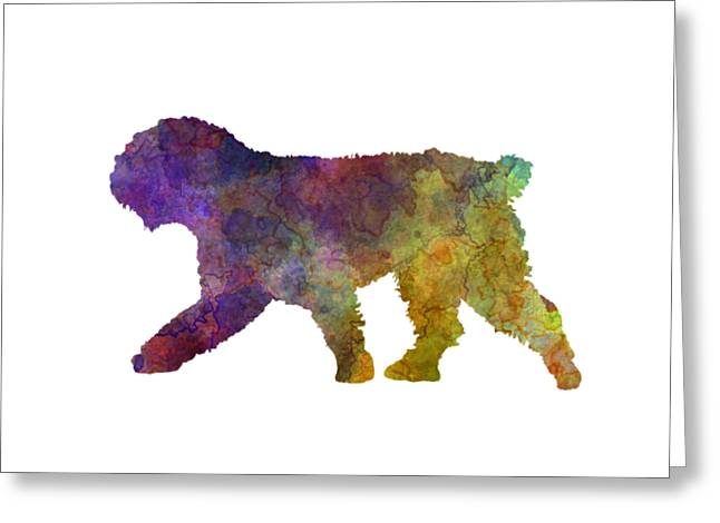 Spanish Water Dog In Watercolor Greeting Card by Pablo Romero
