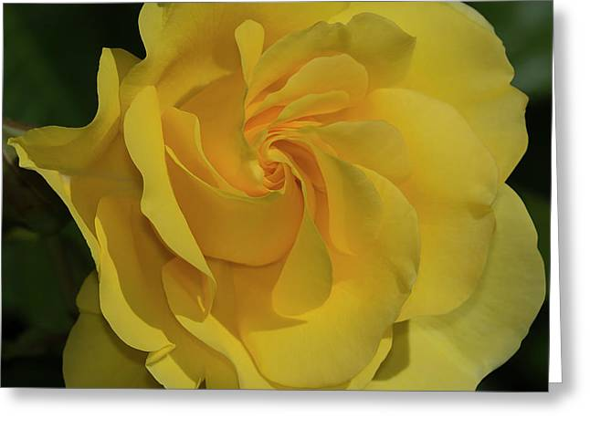 Sparkle And Shine Rose Greeting Card