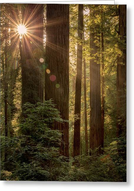 Sparkle In The Redwoods Greeting Card