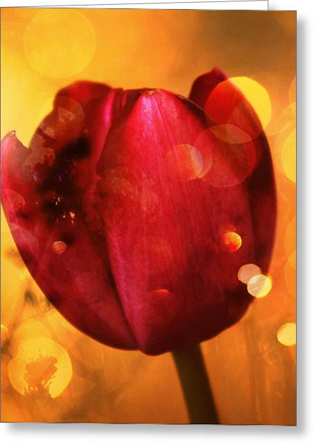 Mixed Media Greeting Cards - Sparkle of the Tulip Greeting Card by Cathie Tyler