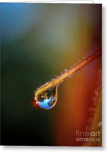 Sparkling Drop Of Dew Greeting Card by Tom Claud