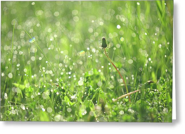 Sparkling Morning. Green World Greeting Card by Jenny Rainbow