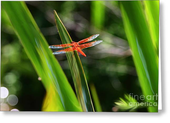 Sparkling Red Dragonfly Greeting Card