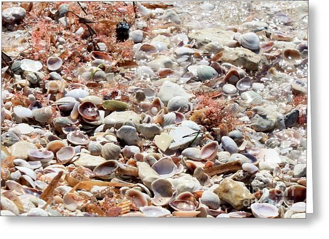 Sparkling Shells Greeting Card by Carol Groenen