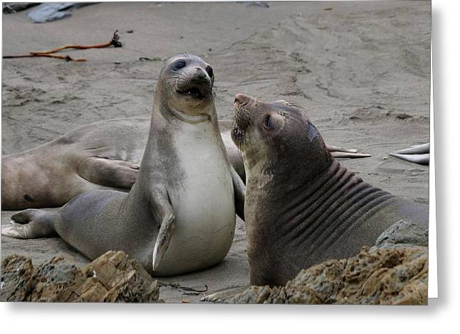 Sparring Seals  Greeting Card