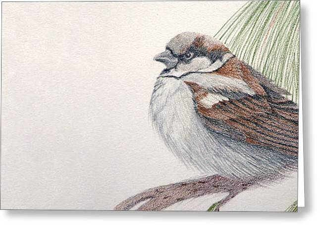 Sparrow Among The Pines Greeting Card by Leslie M Browning