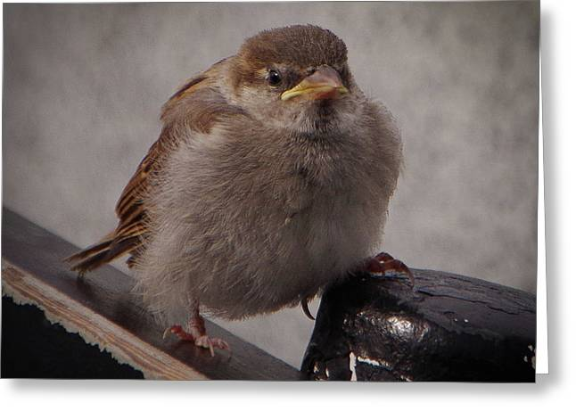 Sparrow Baby Greeting Card