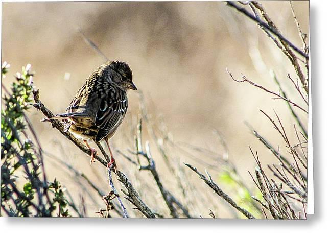 Snarky Sparrow Greeting Card