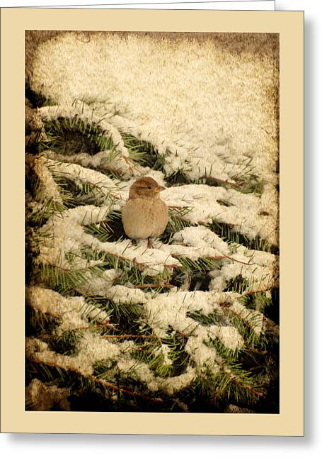 Sparrow In Winter II - Textured Greeting Card