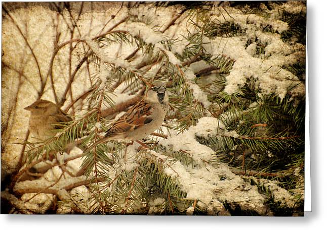 Sparrow In Winter Iv - Textured Greeting Card by Angie Tirado