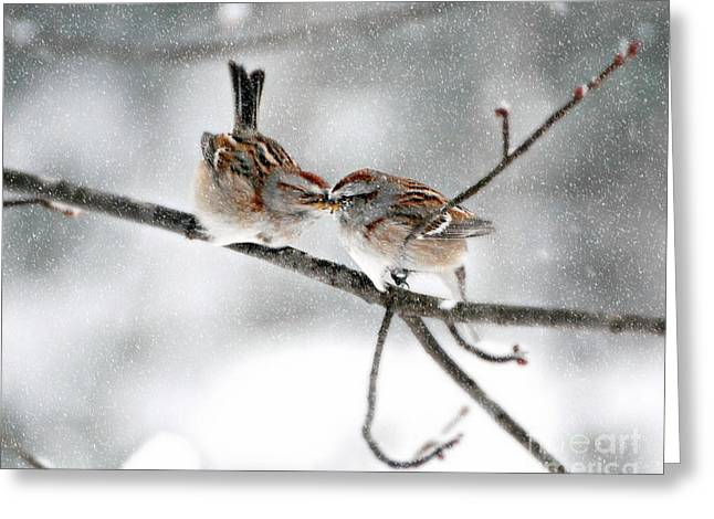 Sparrow Kiss Greeting Card