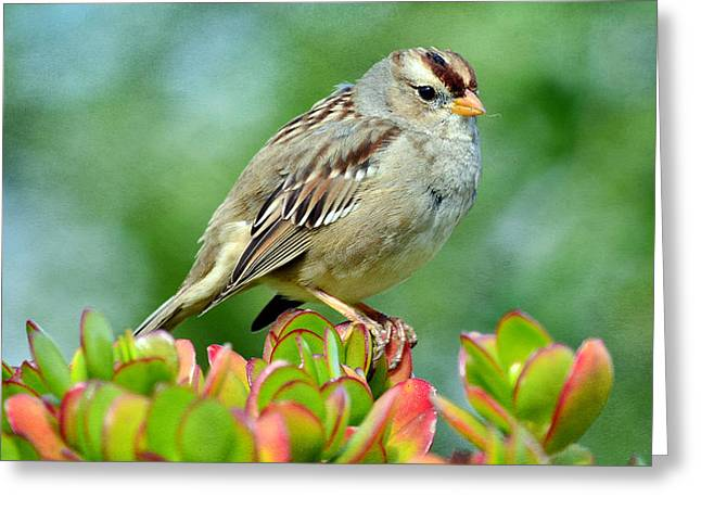 Sparrow Song 9 Greeting Card