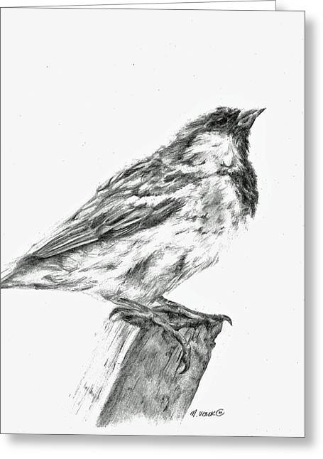 Sparrow Study Greeting Card by Meagan  Visser