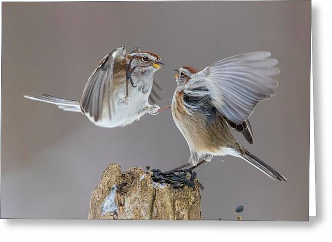 Greeting Card featuring the photograph Sparrows Fight by Mircea Costina Photography