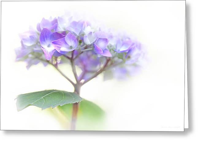 Speak Softly Hydrangea Flower Greeting Card by Jennie Marie Schell