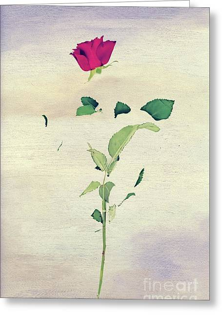 Special Rose Greeting Card by Svetlana Sewell