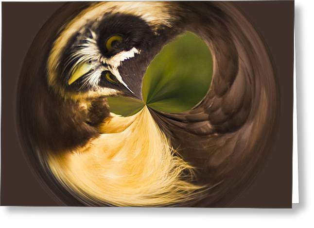 Greeting Card featuring the photograph Spectacled Owl Orb by Bill Barber