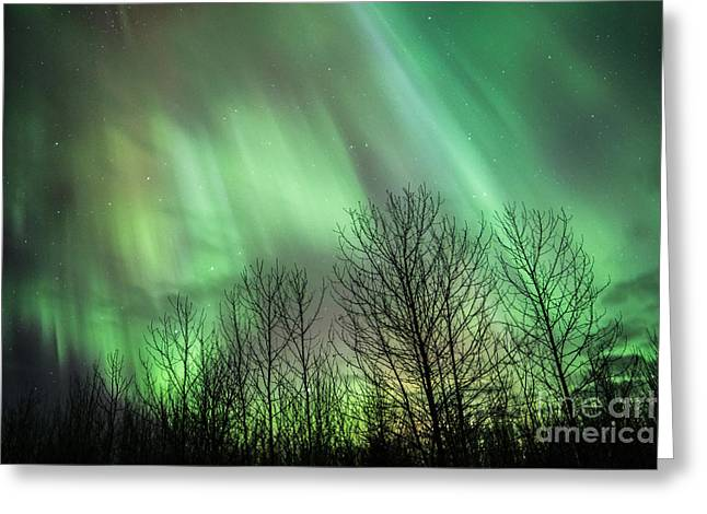 Spectacular Lights Greeting Card