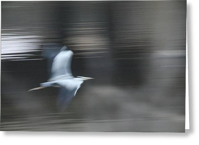 Speed Of Bird Greeting Card by Hyuntae Kim