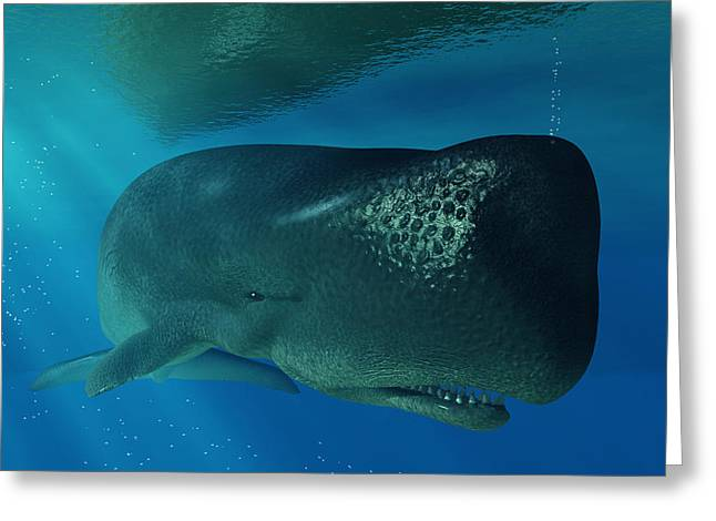 Sperm Whale Greeting Card by Daniel Eskridge