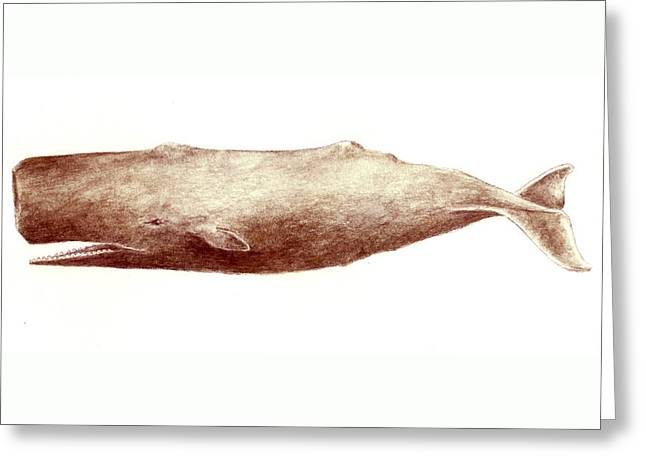 Sperm Whale Greeting Card by Michael Vigliotti