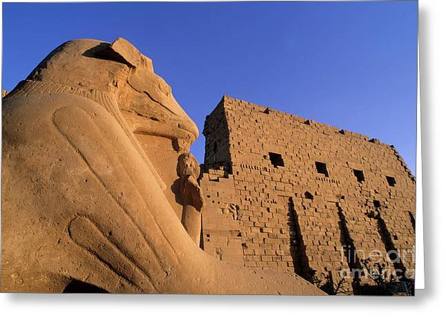 Archaeology Archeological Greeting Cards - Sphinx and the first pylon entrance at sunset at Karnak Temple Greeting Card by Sami Sarkis